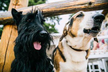 Los perros y el mito de la edad: un año perruno no equivale a siete en humanos. Esta es la verdad 16