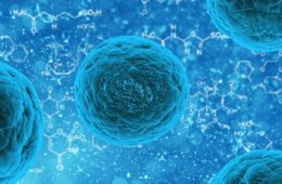 ¿Qué podemos hacer para regenerar nuestras células madre? Ayunar puede ayudarte si lo haces así 6