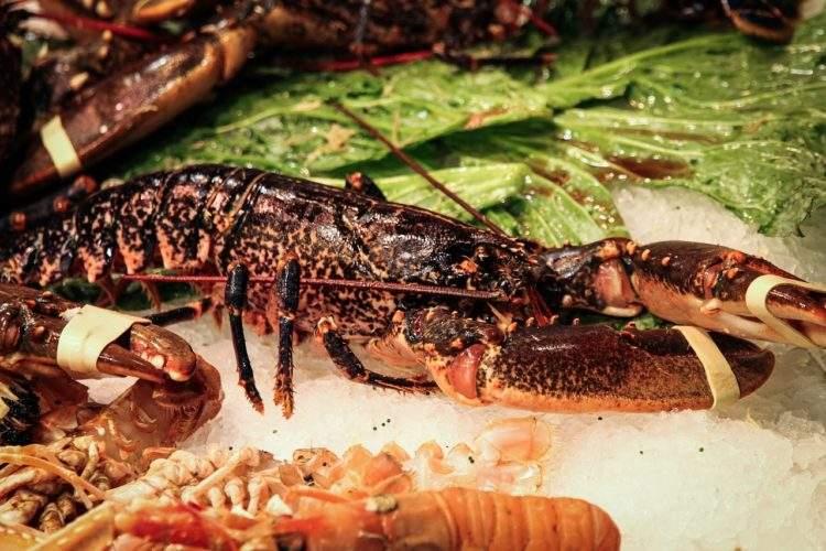 Esta es la historia del cangrejo que sacrificó su pinza para no convertirse en parte de la cena 1