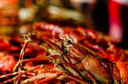 Esta es la historia del cangrejo que sacrificó su pinza para no convertirse en parte de la cena 12
