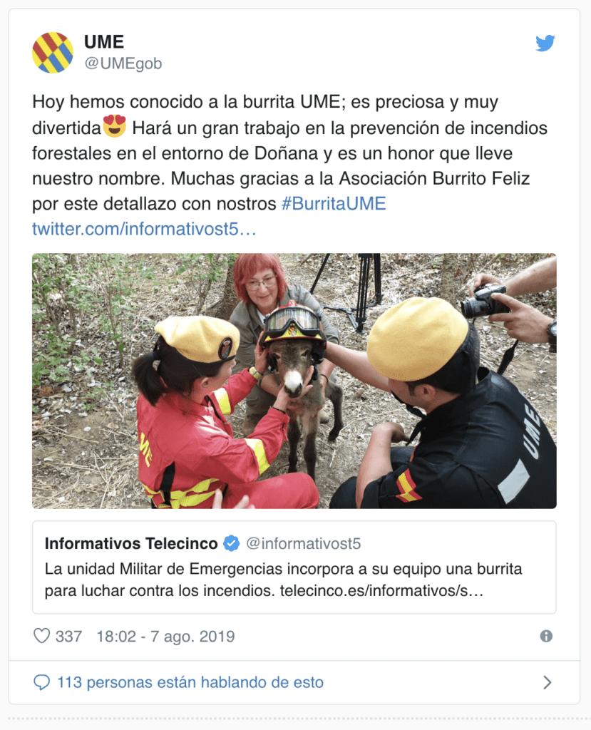 Portugal usará cabras para sanear los montes y prevenir la propagación de incendios 5