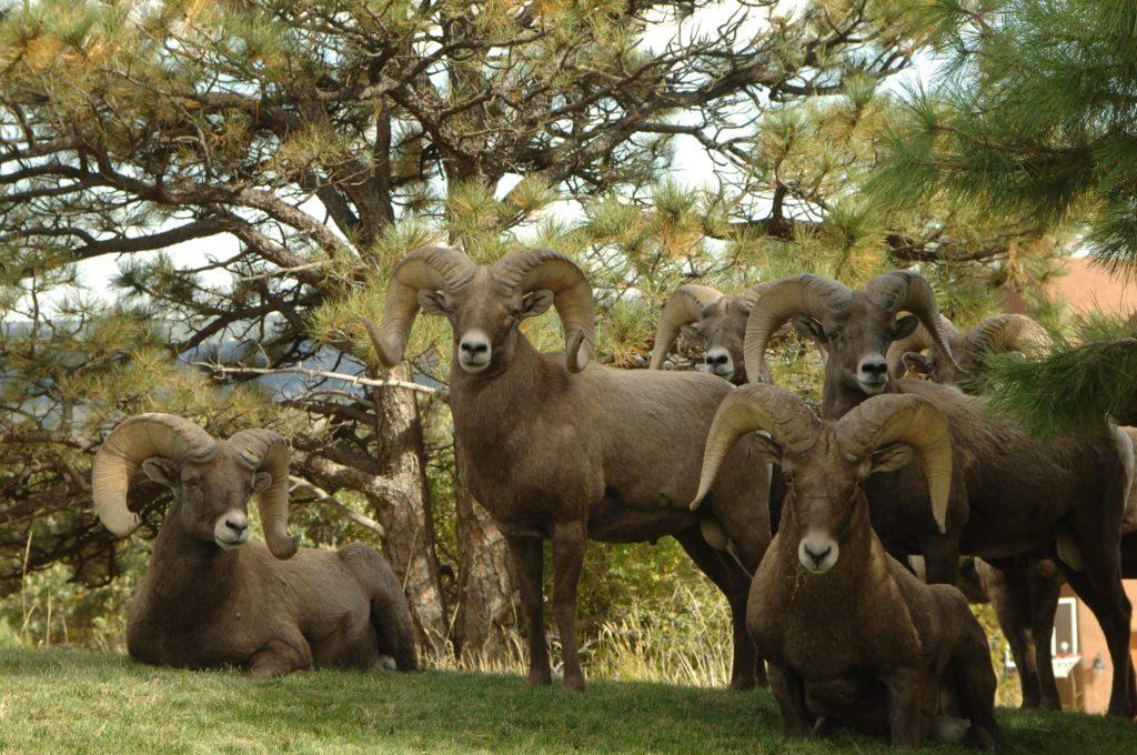 Portugal usará cabras para sanear los montes y prevenir la propagación de incendios 4