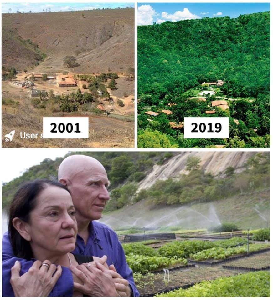 Estos son los proyectos de reforestación más extraordinarios realizados en nuestro planeta 3