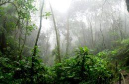 Cuando la naturaleza obra el milagro y la lluvia ayuda a apagar incendios 20