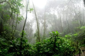 La naturaleza obra el milagro: la lluvia en el Amazonas y está ayudando a apagar el incendio 6