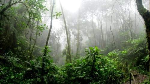 Cuando la naturaleza obra el milagro y la lluvia ayuda a apagar incendios 2