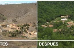 Una pareja planta millones de árboles en una selva tropical destruida. Este es el resultado 18
