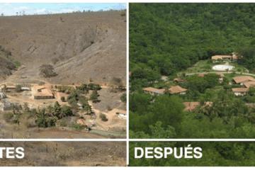 Una pareja planta millones de árboles en una selva tropical destruida. Este es el resultado 13