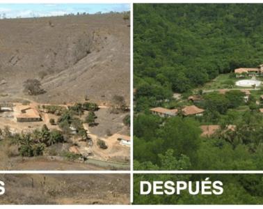 Una pareja planta millones de árboles en una selva tropical destruida. Este es el resultado 20