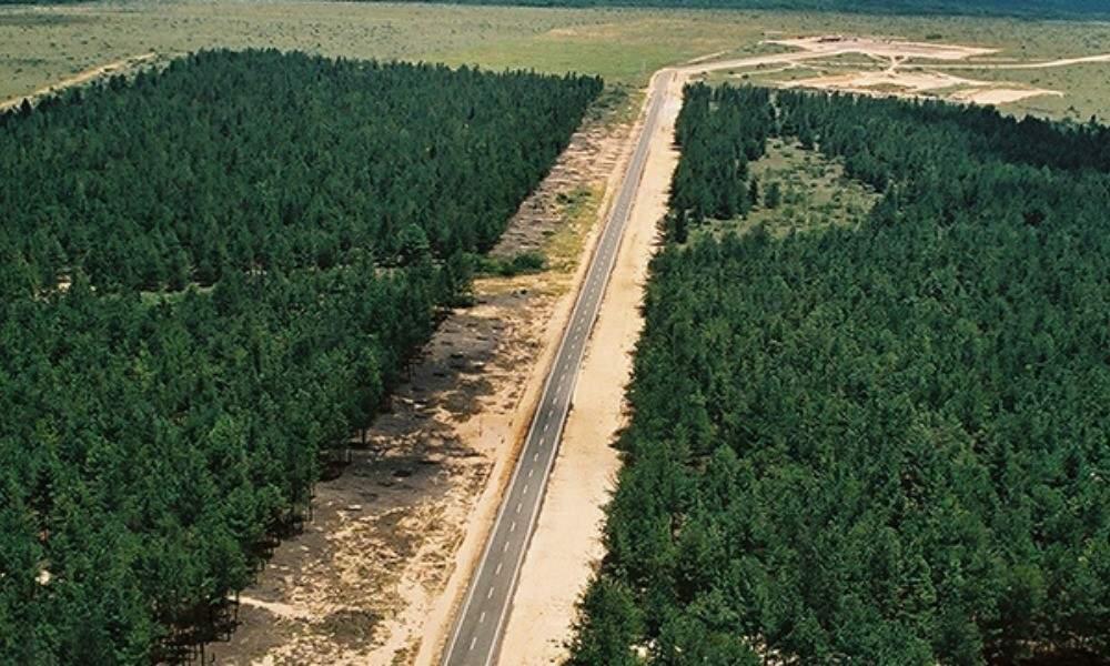 Estos son los proyectos de reforestación más extraordinarios realizados en nuestro planeta 4