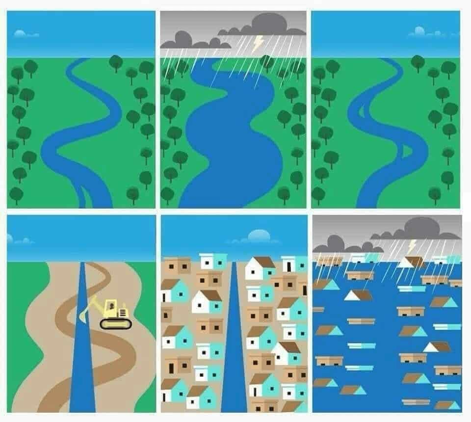 Seguimos talando árboles y preguntándonos por qué cada vez hay más inundaciones 6