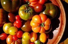 Las 10 mejores variedades de tomate español: características, curiosidades y diferencias 10