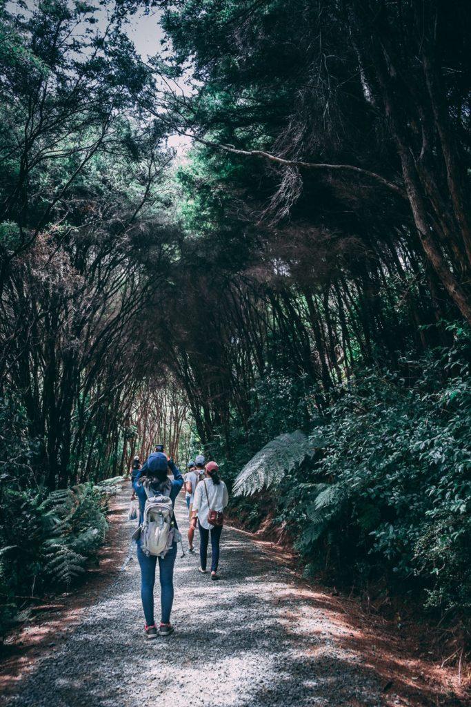 Shinrin-yoku o la medicina japonesa de pasear por el bosque 3