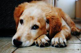 Un perro abandonado cuida durante toda la noche a un anciano con alzhéimer que estaba desorientado 6