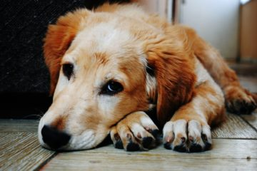Un perro abandonado cuida durante toda la noche a un anciano con alzhéimer que estaba desorientado 61