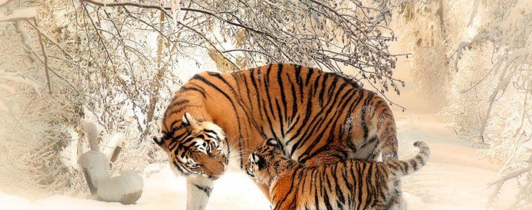 La tierra ha perdido más del 60% de sus animales salvajes los últimos 40 años 10