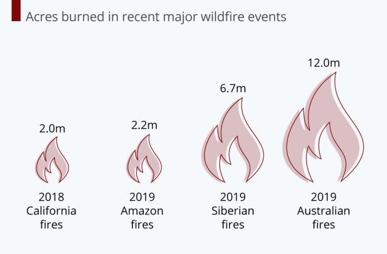 1000 millones de animales muertos y silencio mediático de los incendios en Australia ¡hagamos algo! 2