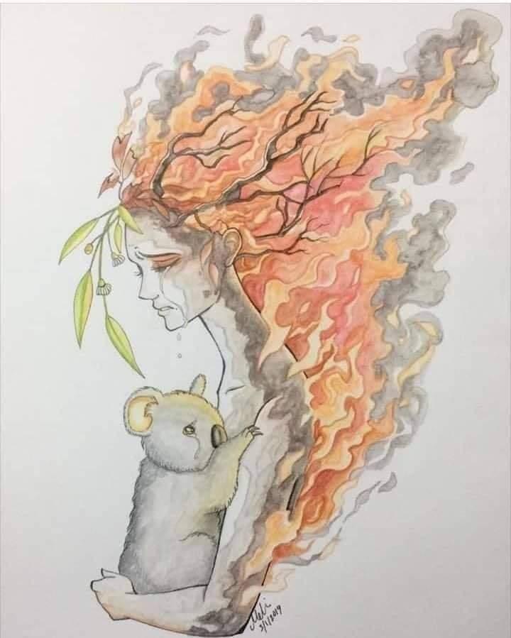 Comparte la historia de este bebé oso para ayudarnos a sensibilizar sobre los graves incendios en Australia 9