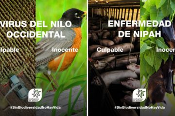 ¿Cómo influye la pérdida de biodiversidad al aumento de pandemias? #SinBiodiversidadNoHayVida 34