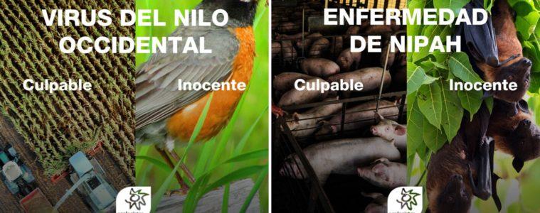 ¿Cómo influye la pérdida de biodiversidad al aumento de pandemias? #SinBiodiversidadNoHayVida 2