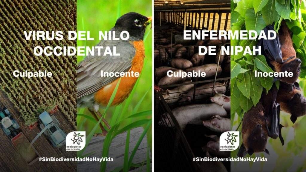 ¿Cómo influye la pérdida de biodiversidad al aumento de pandemias? 2