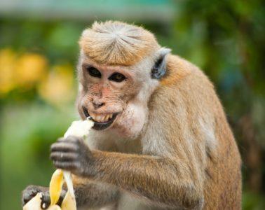¡De locos! Unos monos atacan a un técnico de laboratorio y roban unas muestras de COVID-19 4